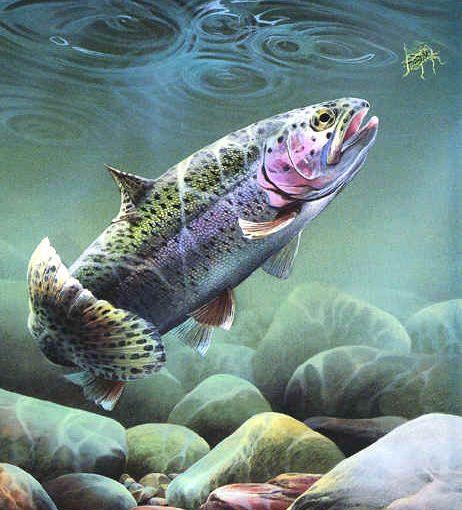 舒伯特(Schubert, 1797-1828):A大調鋼琴五重奏「鱒魚(Trout)」 D.667 Op.114